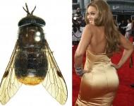 A scaptia Beyoncea and Beyoncé herself.